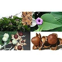Hawaiian Baby Woodrose 10 Seeds (Argyreia nervosa),Hawaiian Strain/HBWR Organic