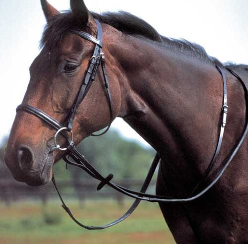 - Windsor Equestrian Products Windsor Equestrian Horse Standing Martingale Black Full