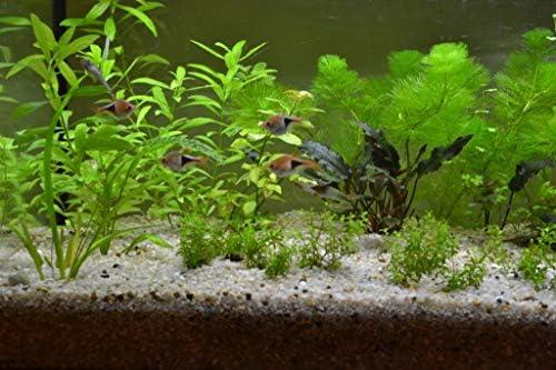 50g Sample, White 0,5-1,2mm TM Aquatix Aquarium Sand Fish Tank Gravel Natural Decoration Substrate