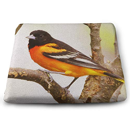 Animal Bird Baltimore Oriole Art Style Memory Foam Seat Cushion - Comfortable Seat Cushion Perfect for Your Office Chair and Sitting On The Floor Gives Relief from Tailbone Pain