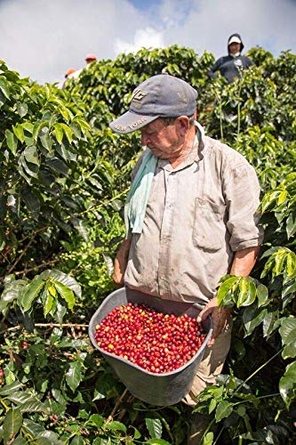 22 lbs COLOMBIA SANTA BARBARA ESTATE EXCELSO AA+ GREEN COFFEE BEANS by Invalsa Coffee (Image #7)