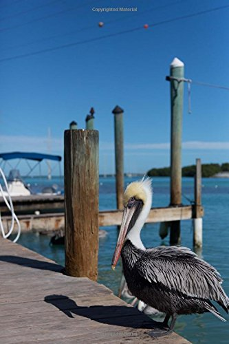 Read Online Cool Pelican in Key West Florida USA Bird Journal: 150 Page Lined Notebook/Diary ebook