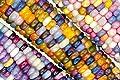 20 Glass Gem Indian Corn Seeds by RDR Seeds