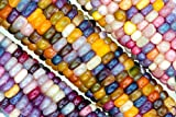 buy 20 Glass Gem Indian Corn Seeds by RDR Seeds now, new 2018-2017 bestseller, review and Photo, best price $4.99