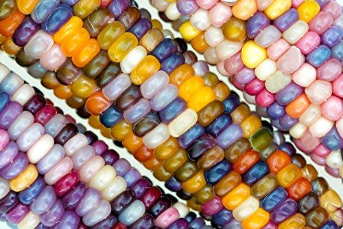 indian corn seeds - 7