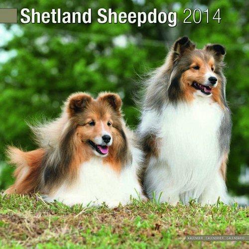 Shetland Sheepdog 2014 Wall Calendar