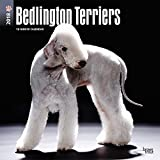 Bedlington Terriers 2018 12 x 12 Inch Monthly Square Wall Calendar, Animals Dog Breeds Terrriers