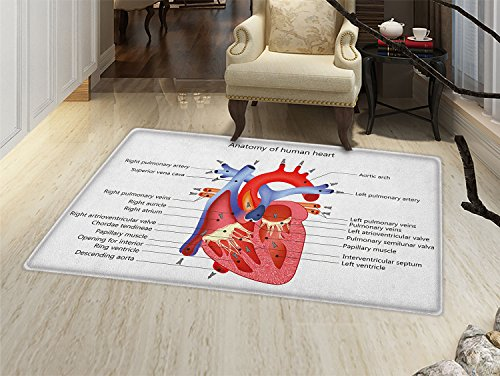 smallbeefly Educational Door Mats Area Rug Medical Structure of the Hearts Human Body Anatomy Organ Veins Cardiology Floor mat Bath Mat for tub Coral Red Blue by smallbeefly