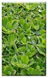 Single-Gang Blank Wall Plate Cover - Aquatic Plant Floating Plant Tropical Shell Flower