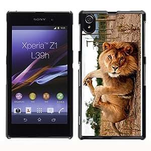 TopCaseStore / la caja del caucho duro de la cubierta de protección de la piel - Cute Funny Lion Playing - Sony Xperia Z1 L39 C6902 C6903 C6906 C6916 C6943