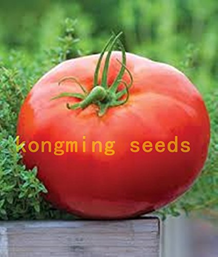 (200 pcs Super Rare Red Giant Competition Russian Heirloom Tyazeloves Tomato seeds vegetable seeds for garden plant NO-GMO)