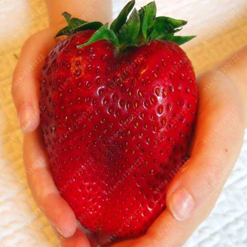1000pcs Germany super big strawberry seeds,fruit seeds, garden supplies,bonsai seeds gaint strawberry plant pot for home garden SVI