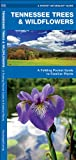 Tennessee Trees & Wildflowers: A Folding Pocket Guide to Familiar Species (Pocket Naturalist Guide Series)