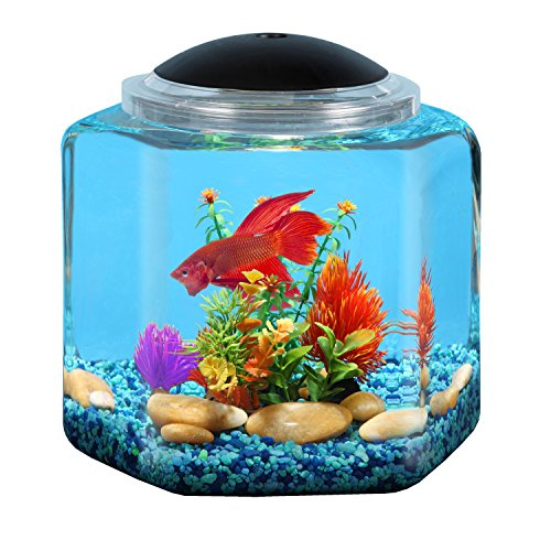BettaTank 2-Gallon Hex with LED Lighting by Koller Products