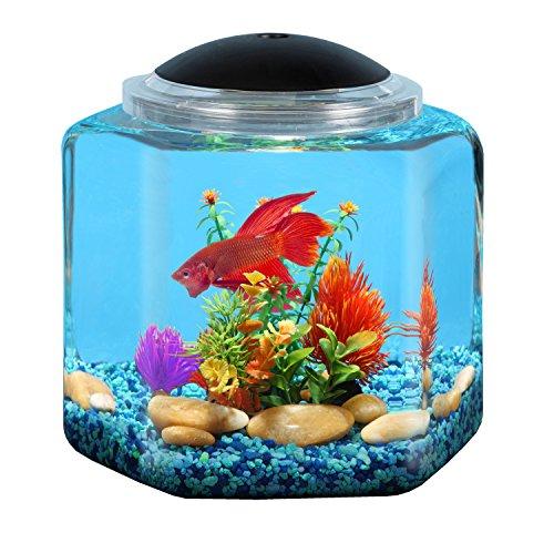 API Betta Kit Hex Fish Tank, 2 gallon