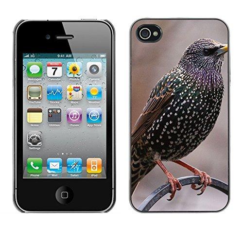 Premio Sottile Slim Cassa Custodia Case Cover Shell // F00012375 oiseau // Apple iPhone 4 4S 4G