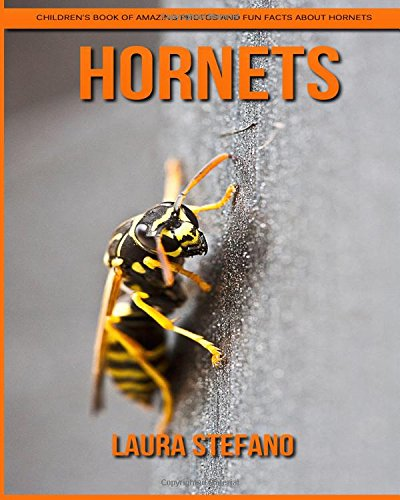 Download Hornets: Children's Book of Amazing Photos and Fun Facts about Hornets PDF