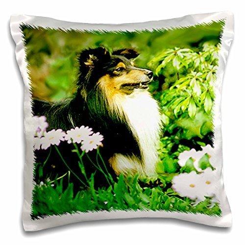 Dogs Sheltie/Shetland Sheepdog - Sheltie - 16x16 inch Pillow Case