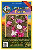Everwilde Farms - 1 Oz Clarkia Native Wildflower Seeds - Gold Vault