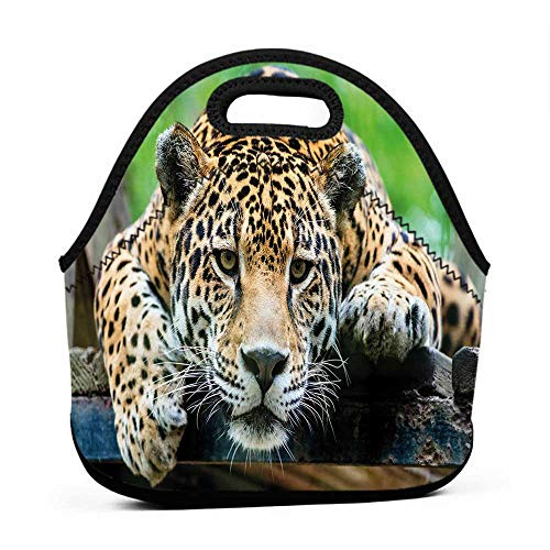 Wild Animals Lunch Box - Travel Case Lunchbox with Zip Jungle,South American Jaguar Wild Animal Carnivore Endangered Feline Safari Image,Orange Black Green,six pack lunch bag for men
