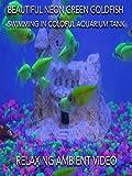 Beautiful neon green goldfish swimming in colorful aquarium tank relaxing ambient video