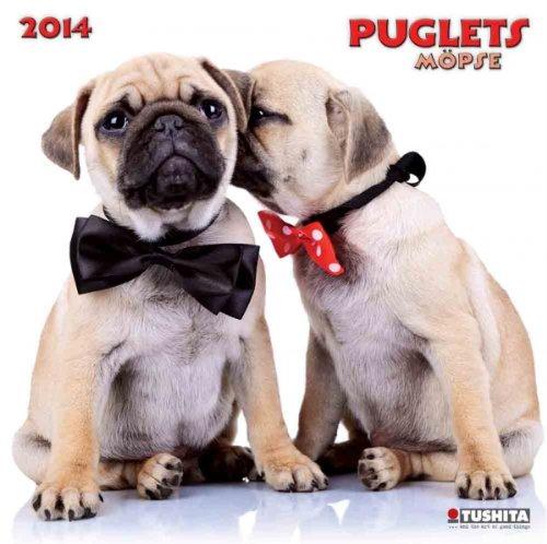 Puglets 2014 What a Wonderful World: Möpse