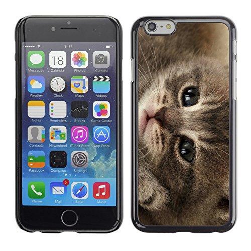 """Premio Sottile Slim Cassa Custodia Case Cover Shell // V00003223 mignon chaton // Apple iPhone 6 6S 6G 4.7"""""""