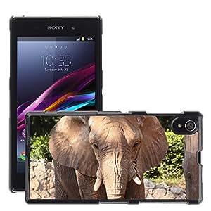 Print Motif Coque de protection Case Cover // M00126518 Cara Elefantes Gris Negro Jefe // Sony Xperia Z1 L39 C6903 C6906 C6943 C6902