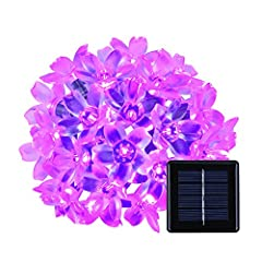 ☺Specifications of flower shape string lights:   *Light color: purple  *LED quantity: 50pcs * Battery: built-in 600mAH NI-MH battery  * Lumens: 100LM * Power source: solar power * Working temperature: -20 -60 * Solar panel: 2V 100MA  * Batter...