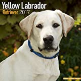 Yellow Lab Calendar 2017 - Yellow Labrador - Dog Breed Calendars - 2016 - 2017 wall calendars - 16 Month by Avonside