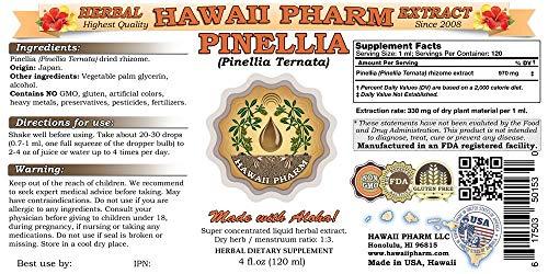 Amazon.com: Pinellia, Zhi Ban Xia (Pinellia Ternata) Tincture, Dried Rhizome Liquid Extract, Pinellia, Glycerite Herbal Supplement 64 oz: Health & Personal ...