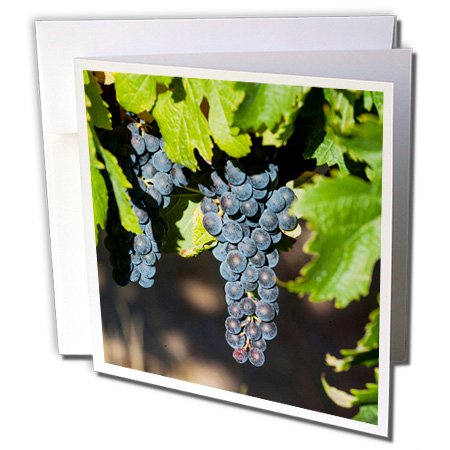 danita-delimont-australia-margaret-river-wine-region-6-greeting-cards-with-envelopes-gc-226426-1