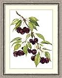 Framed Art Print 'Watercolor Cherries' by Michael Willett
