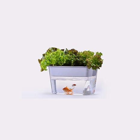 XB AMZ Acuario Pecera Paisaje Acuario Agua Jardín Hidroponía Sistema De Cultivo con Brotes Orgánicos Y