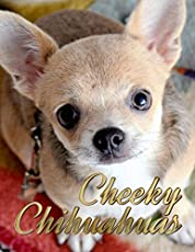 Pomchi A Guide To The Chihuahua Pomerian Mix