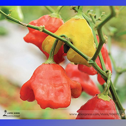 2018 Hot Sale Mixed Bishop's Crown Chili Pepper Seeds, Professional Pack, 20 Seeds/Pack, Rare Trinidad UFO Peppers Edible - Lavender Bishop