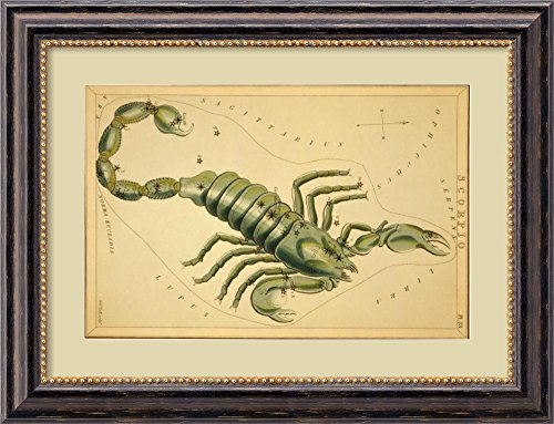 Scorpio, 1825 by Jehoshaphat Aspin Framed