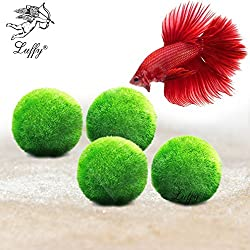 "4 Luffy Giant Marimo Betta Balls (1.5"") --- Biological, Natural, Chemical-Free Filter System - Removes Nitrates - Beautiful way to keep Betta and Aquarium Plants Healthy - Easy maintenance"