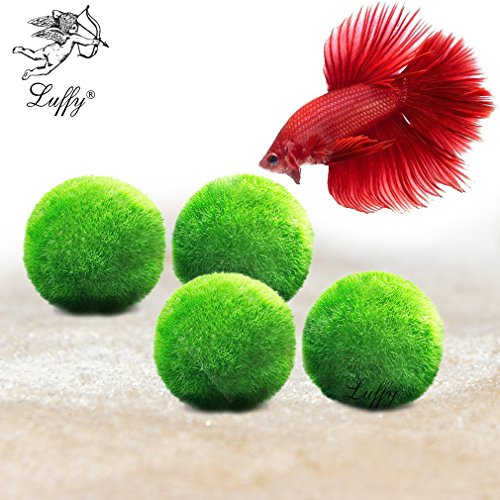 "4 Luffy Giant Marimo Betta Balls (1.5"") --- Biological, Natural, Chemical-Free Filter System - Removes Nitrates - Beautiful way to keep Betta and Aquarium Plants Healthy - Easy maintenance (Designer Fish Tank)"