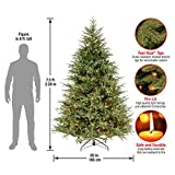 National Tree Feel Real Frasier Grande Tree, 7.5