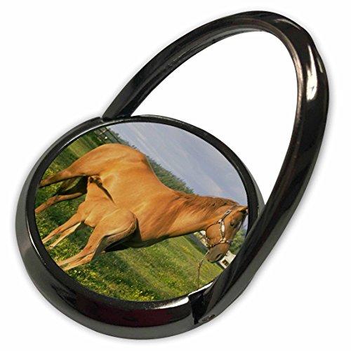 3dRose TDSwhite - Horse Equine Photos - Nursing Foal Field - Phone Ring (phr_285527_1)