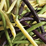 Organic Heirloom Tri colour Beans 50+ Vegetable Seeds