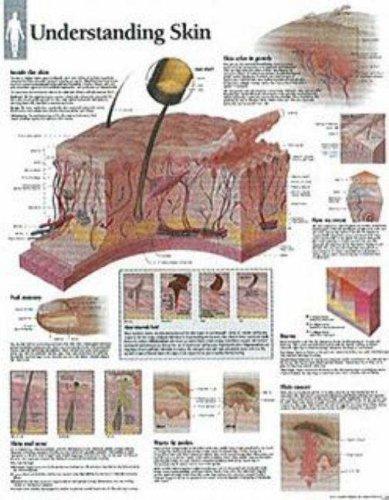 Understanding Skin chart: Wall Chart