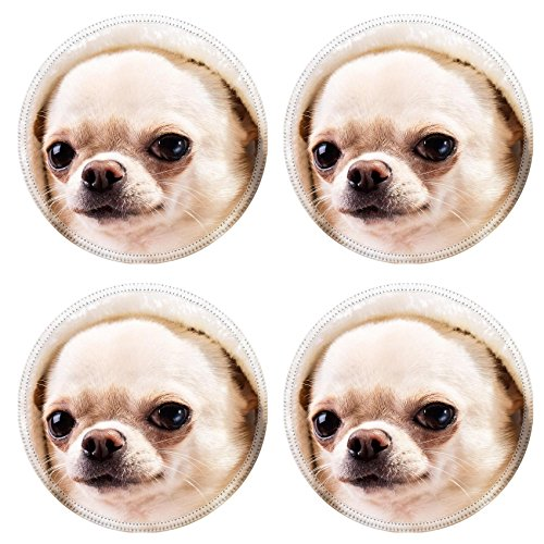 [MSD Round Coasters Image ID 24455689 face of chihuahua dog in hood close up portrait] (Animals Dressed Up In Halloween Costumes)