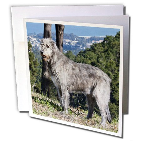 3dRose Danita Delimont - Dogs - An Irish Wolfhound dog with pine trees - NA02 ZMU0128 - Zandria Muench Beraldo - 12 Greeting Cards with envelopes ()