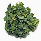 Broccoli Raab Seeds, Rapini, Heirloom, Organic, Non Gmo, 100 Seeds, Delicious a Culinary Delight