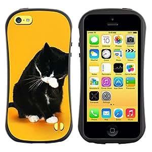 Suave TPU GEL Carcasa Funda Silicona Blando Estuche Caso de protección (para) Apple Iphone 5C / CECELL Phone case / / Funny Lol Wtf Cat /