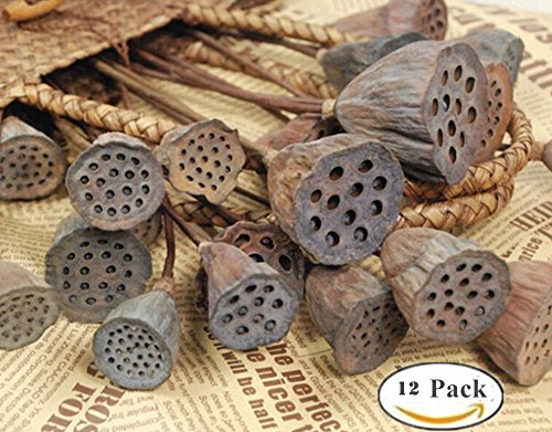 Kuso Natural Dried Lotus Pods on Stems With Seed And Real Rod Dried Floral Crafts Pack of 12 (dia 2.5-4.5 in) ,Taking pictures props