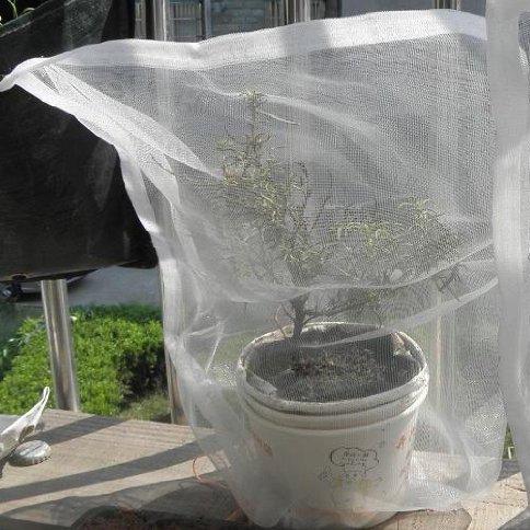 "AMARS 6pcs 24"" x 16"" Insect Mosquito Bug Bird Net Barrier Bag Garden Hunting Blind Netting for Garden Plant Vegatable Fruits Flower"