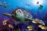 CHOIS Custom Films CF3053 Animal Fishes Seaturtle Glass Window Privacy Frosted 3' W by 2' H